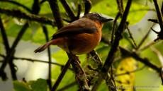 Archer's Ground Robin